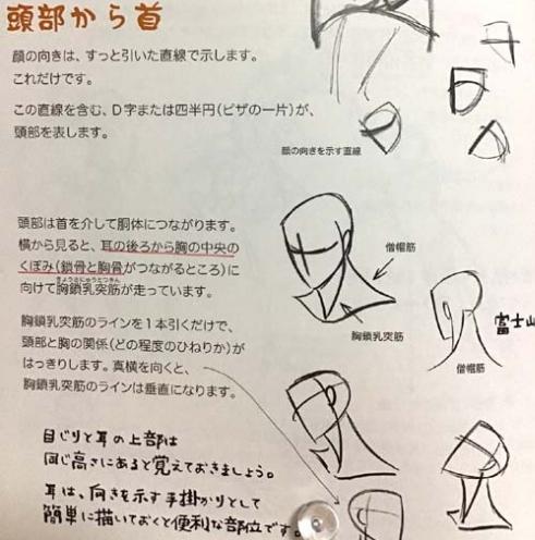 頭部の解説